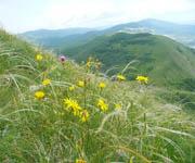 Высотная поясность - горная степь
