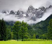 Высотная поясность - Горные леса