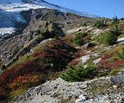 Высотная зональность - горная тундра