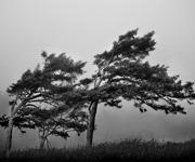 Горный ветер Мистраль
