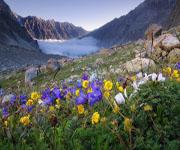 Высотная поясность альпийский луг
