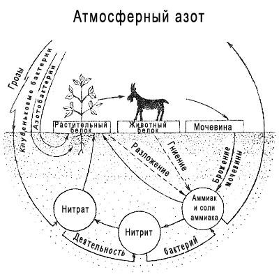 Геохимический круговорот азота. Азот в атмосфере Земли
