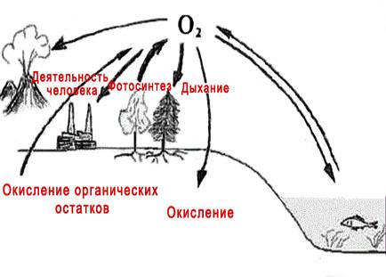 Геохимический круговорот кислорода. Кислород в атмосфере Земли