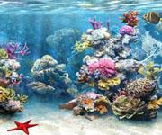 Флора и фауна – общая характеристика и описание Тихого океана