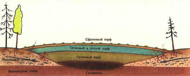 Образование низинного болота. Схема болота.