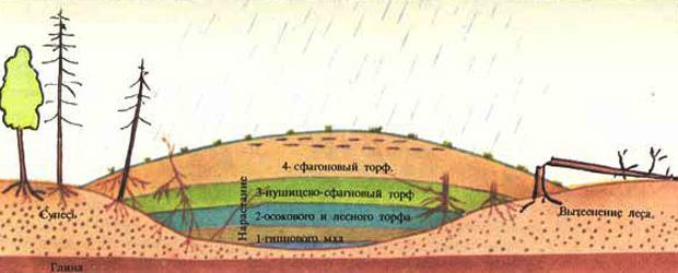 Образование верхового болота. Схема болота.