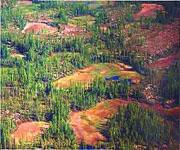 Типы и виды болот. Какие бывают болота?