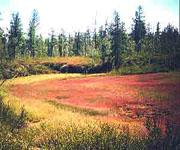 Олиготрофное болото. Типы и виды болот. Какие бывают болота?