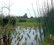 Заболоченное озеро. Образование болот.