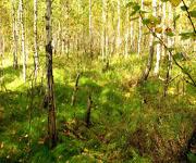 Заболоченный лес. Образование болот.