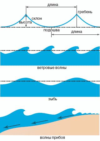 Строение и виды волн