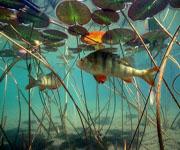 Гидробиологический режим озер